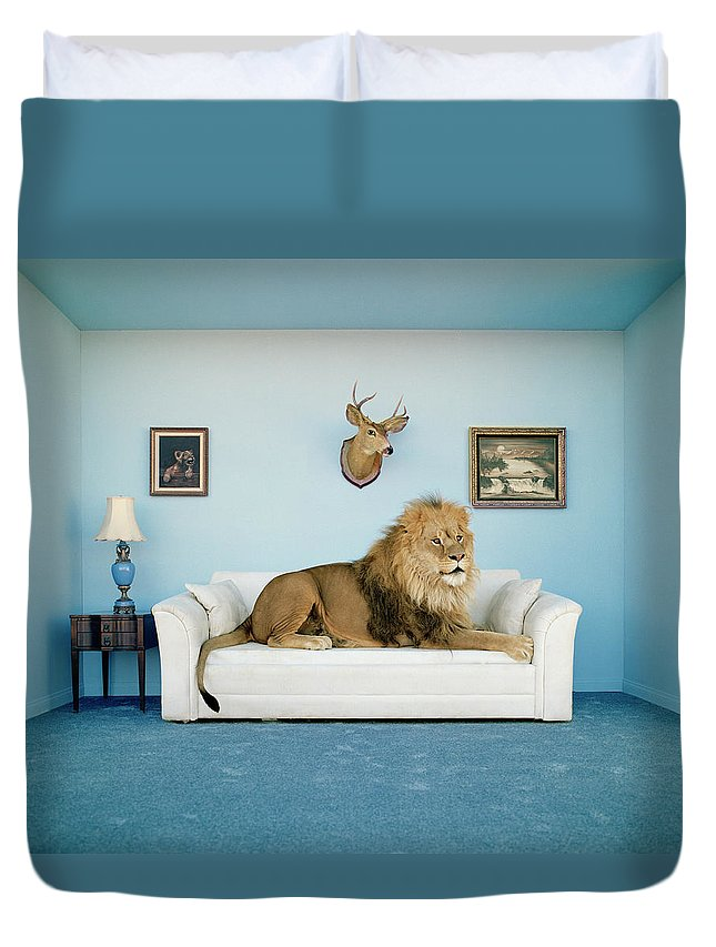 Pets Duvet Cover featuring the photograph Lion Lying On Couch, Side View by Matthias Clamer