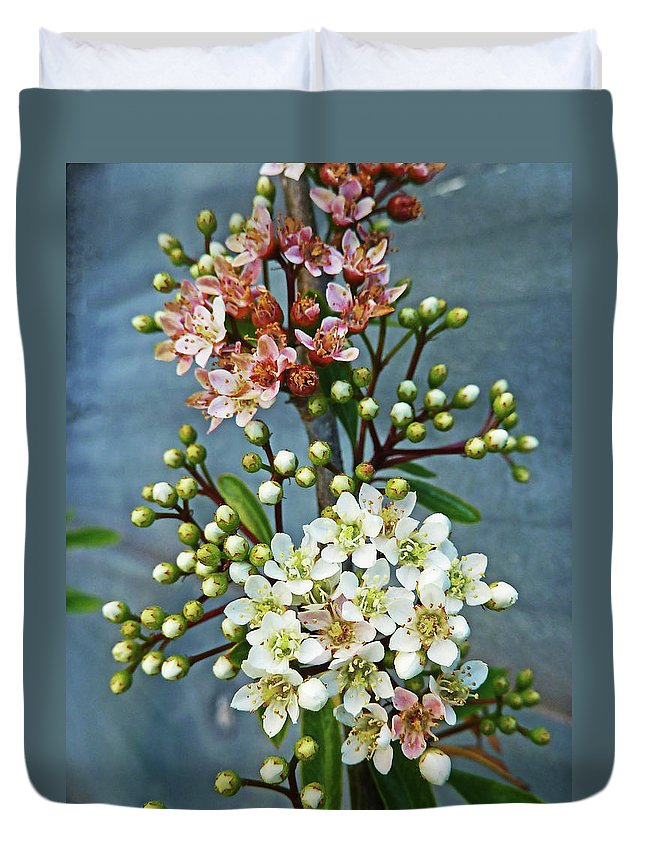 Bud Duvet Cover featuring the photograph Little Star Like Buds by Steve Taylor Photography