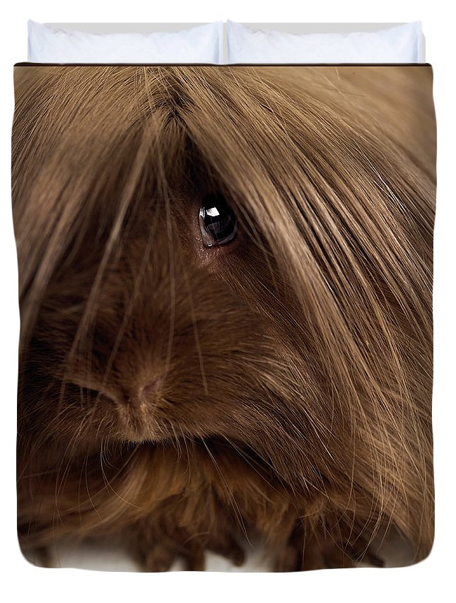 Pets Duvet Cover featuring the photograph Long Haired Guinea Pig, Close-up by Michael Blann