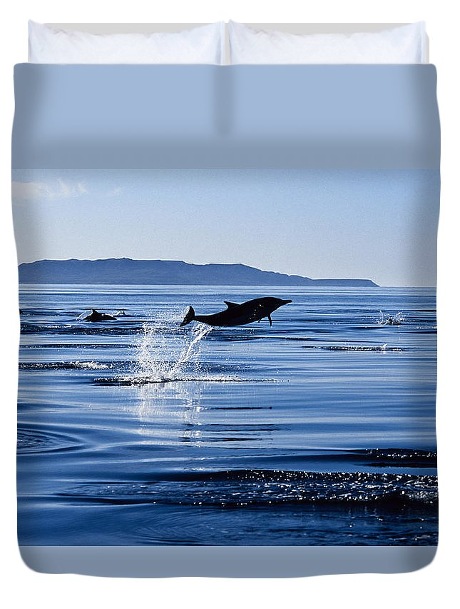 Latin America Duvet Cover featuring the photograph Long-nosed Common Dolphin,delphinus by Gerard Soury