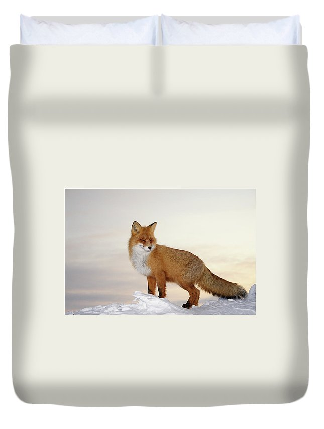 Black Color Duvet Cover featuring the photograph Majestic Fox by Dmitrynd