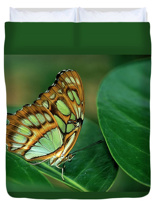 Nymphalidae Duvet Cover featuring the photograph Malachite Butterfly, Siproeta Stelenes by Adam Jones