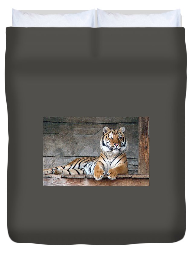 Animal Themes Duvet Cover featuring the photograph Malayan Tiger by Photography By P. Lubas