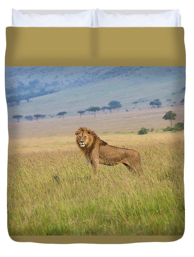 Kenya Duvet Cover featuring the photograph Male Lion In The Savanna Masai Mara by Seppfriedhuber