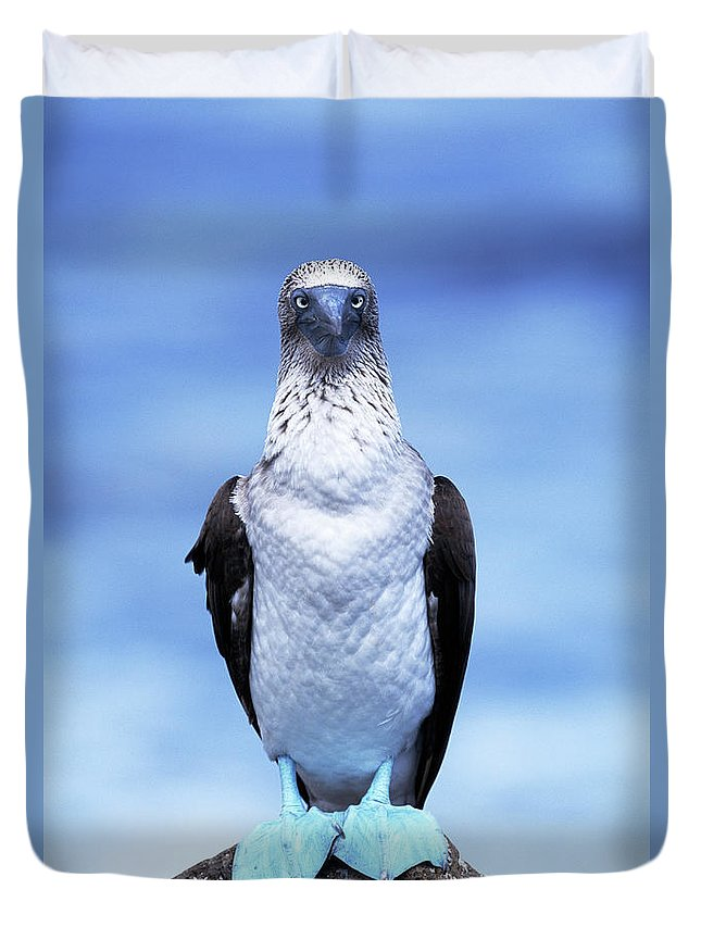 Animal Themes Duvet Cover featuring the photograph Masked Booby Sula Dactylatra Galapagos by Art Wolfe