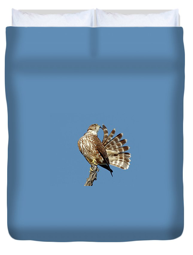 Animal Themes Duvet Cover featuring the photograph Merlins Grooming Session by Bmse