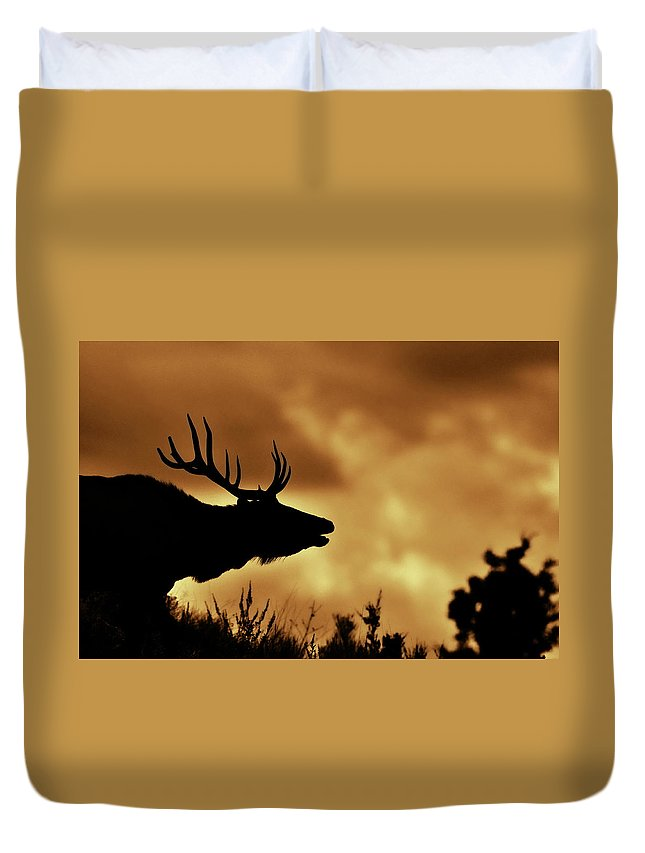 Animal Themes Duvet Cover featuring the photograph Moose At Sunrise by Photo By James Keith