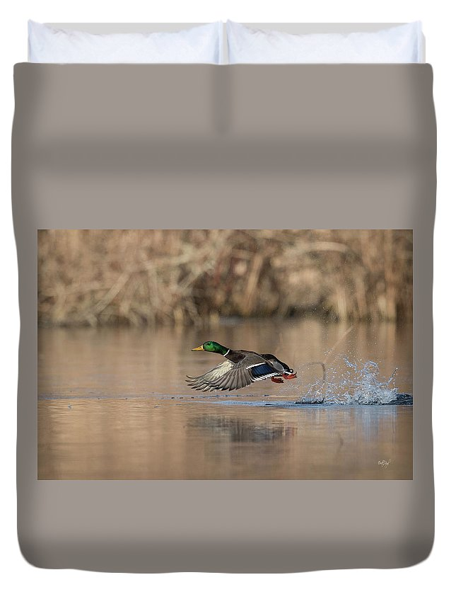 Duck Duvet Cover featuring the photograph Morning Flight by Everet Regal