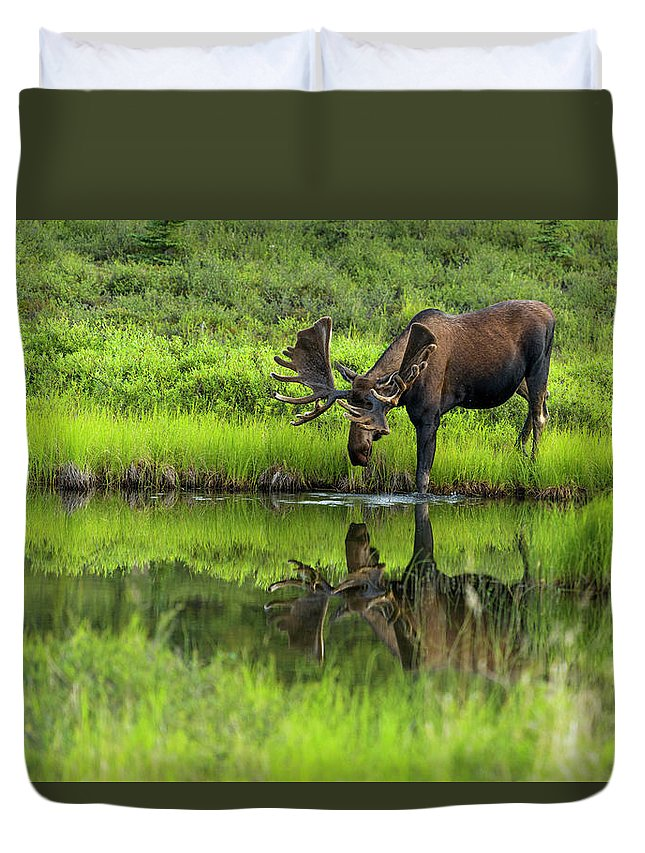 Alaska Duvet Cover featuring the photograph Morning Isolation by Chad Dutson