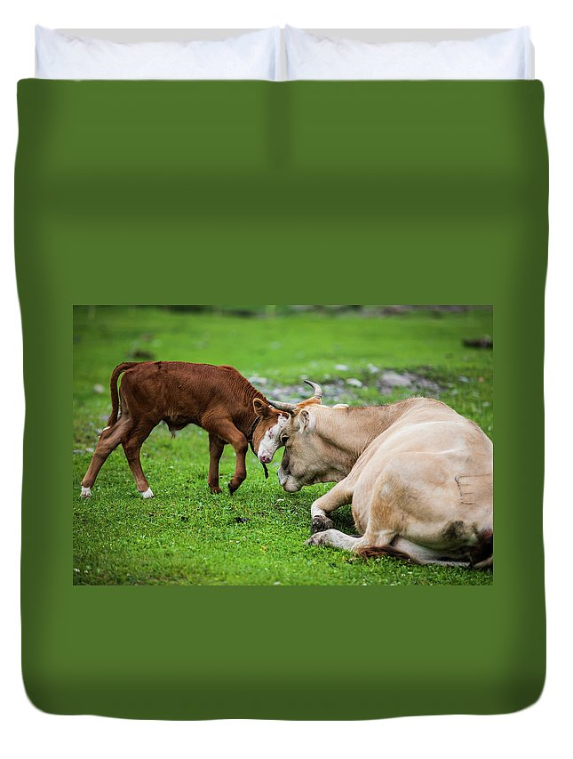 Grass Duvet Cover featuring the photograph Mother And Son by Zhouyousifang