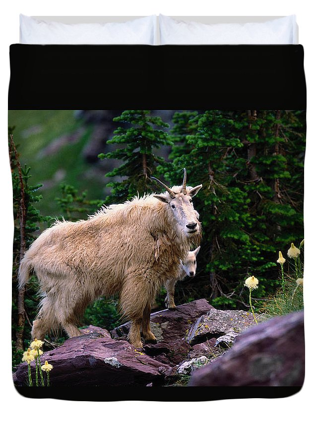 Animal Themes Duvet Cover featuring the photograph Mountain Goat Oreamnos Americanus by Art Wolfe