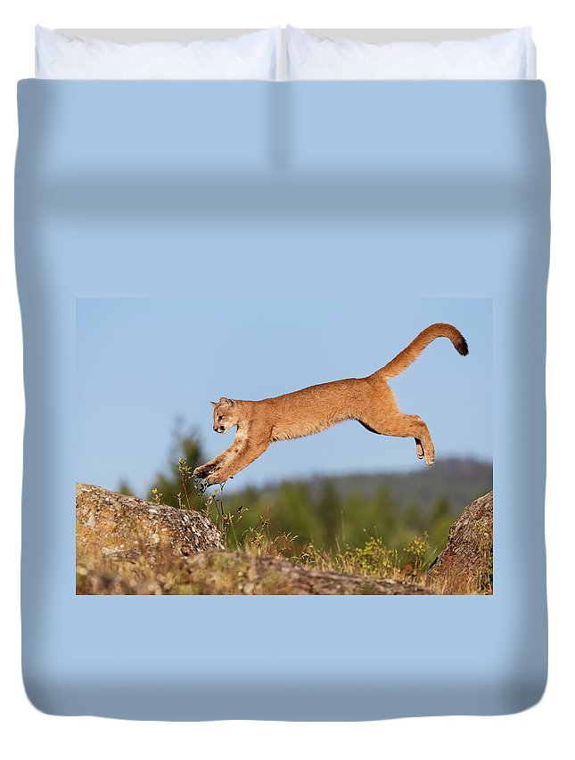 Animal Themes Duvet Cover featuring the photograph Mountain Loin by Gary Samples