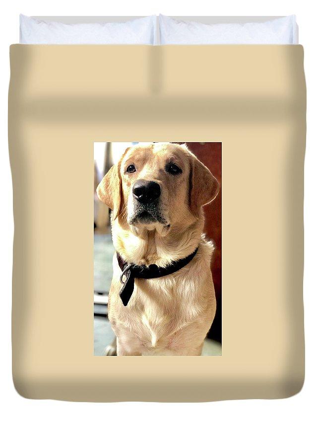 Labrador Dog Duvet Cover featuring the photograph Labrador Dog by Arun Jain