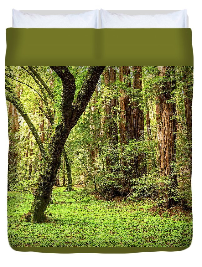 Tranquility Duvet Cover featuring the photograph Muir Woods Forest by By Ryan Fernandez