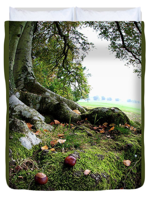 Nut Duvet Cover featuring the photograph Nuts And Fallen Leaves At The Foot Of A by John Short / Design Pics