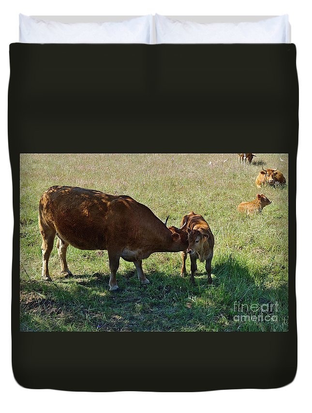 Cows Duvet Cover featuring the photograph Old And Young by Angelo DeVal