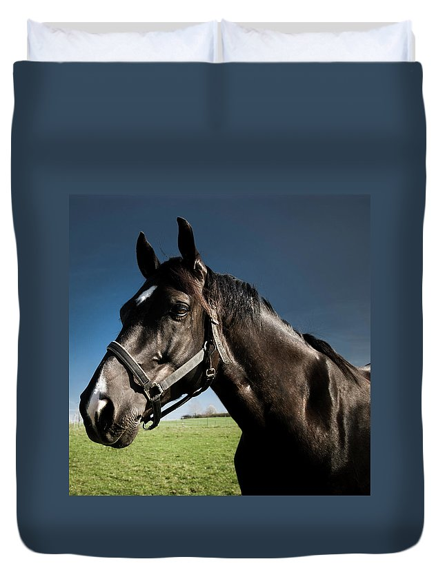Horse Duvet Cover featuring the photograph On The Meadow by Pixalot