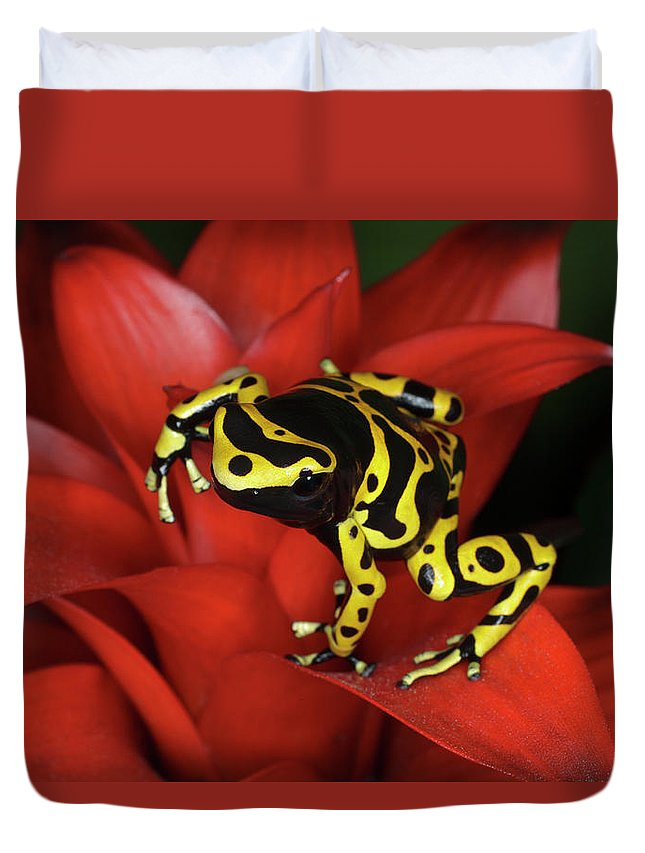 Animal Themes Duvet Cover featuring the photograph Orange Banded Dart Frog Dendrobates by Adam Jones