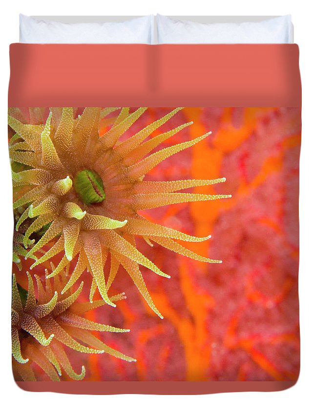 Underwater Duvet Cover featuring the photograph Orange Cup Coral Tubastraea Sp by Rene Frederick