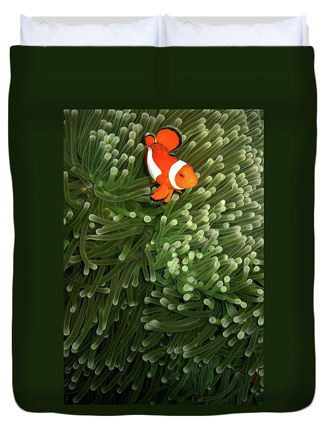 Underwater Duvet Cover featuring the photograph Orange Fish With Yellow Stripe by Perry L Aragon