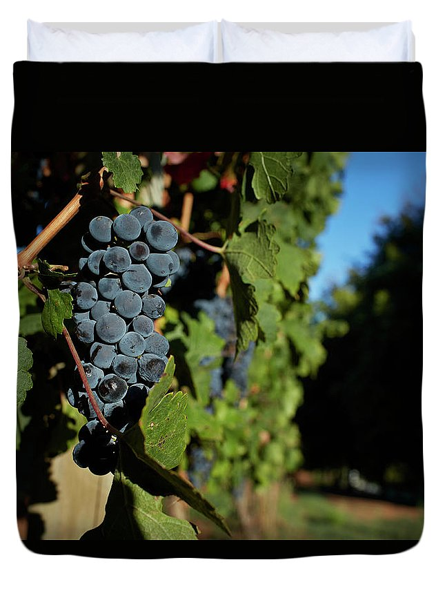 Stellenbosch Duvet Cover featuring the photograph Overripe Grapes Hanging On Vine by Klaus Vedfelt