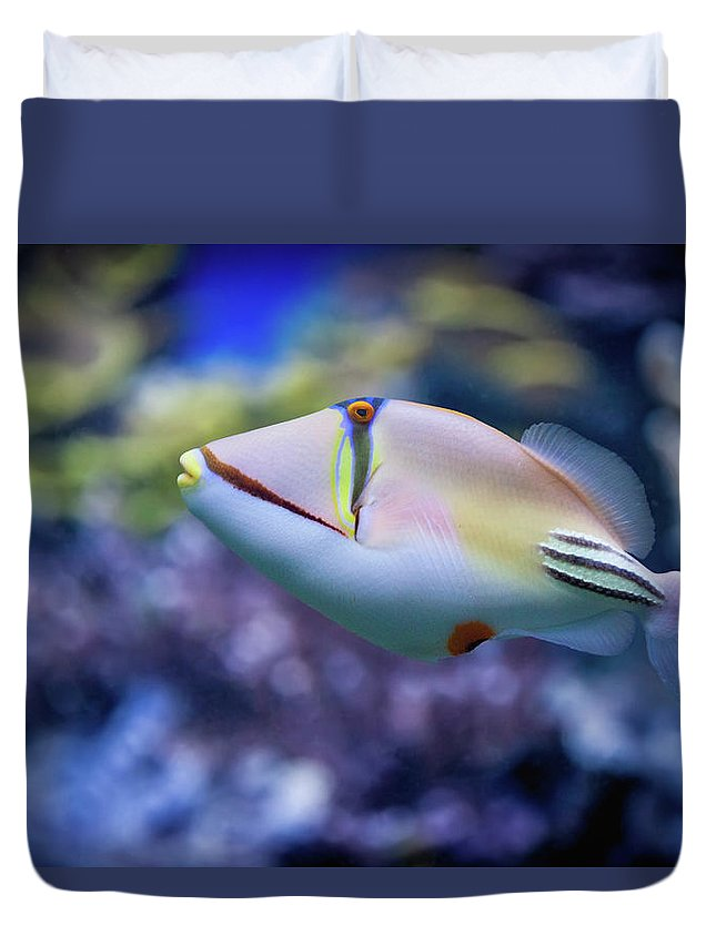 Underwater Duvet Cover featuring the photograph Picasso Triggerfish by Reynold Mainse / Design Pics