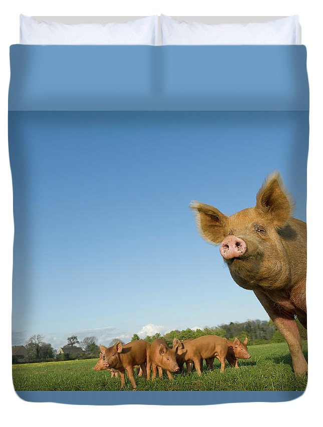 Pig Duvet Cover featuring the photograph Pig In Field by Henry Arden