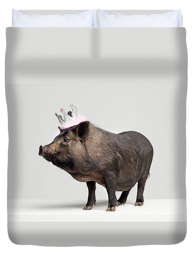 Crown Duvet Cover featuring the photograph Pig With Toy Crown On Head, Studio Shot by Roger Wright