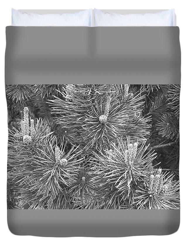 Needle Duvet Cover featuring the photograph Pine Cones And Needles, Close-up B&w by George Marks