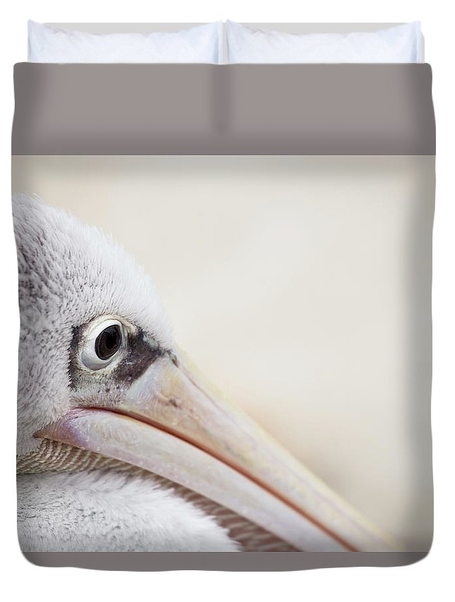 Pink Backed Pelican Duvet Cover featuring the photograph Pink Backed Pelican by Karol Livote