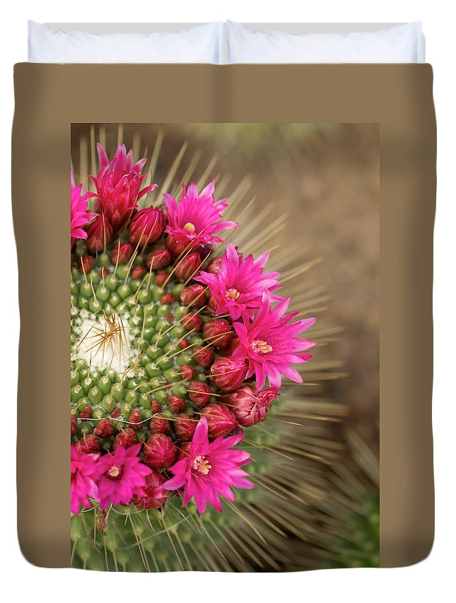 Bud Duvet Cover featuring the photograph Pink Cactus Flower In Full Bloom by Zepperwing