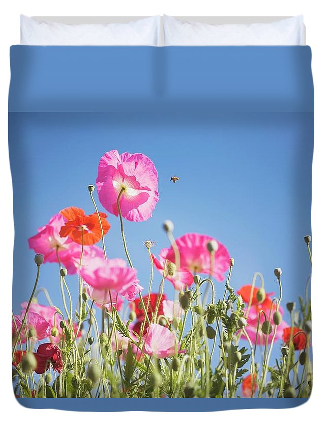 Snow Duvet Cover featuring the photograph Pink Flowers Against Blue Sky by Design Pics/craig Tuttle