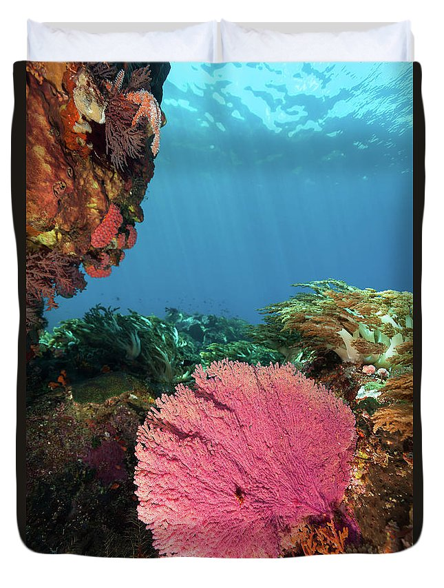Underwater Duvet Cover featuring the photograph Pink Gorgonian Sea Fan, Pura Island by Ifish