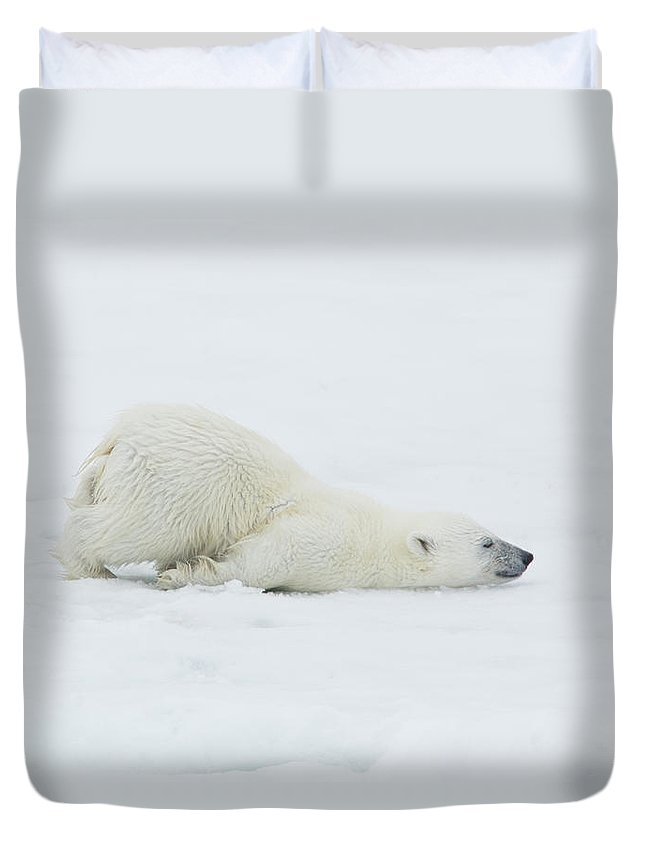 Svalbard Islands Duvet Cover featuring the photograph Polar Bear Cub Stretching Out On Ice by Darrell Gulin