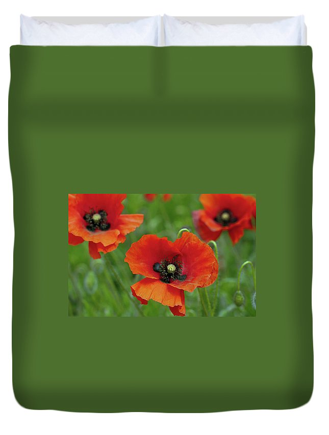 Petal Duvet Cover featuring the photograph Poppies by Photo By Judepics