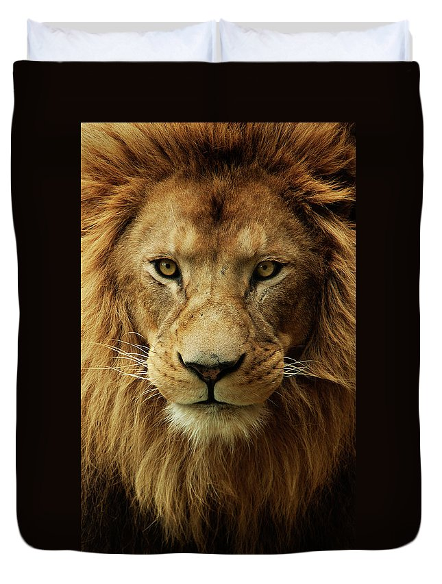 Animal Themes Duvet Cover featuring the photograph Portrait Male African Lion by Brit Finucci