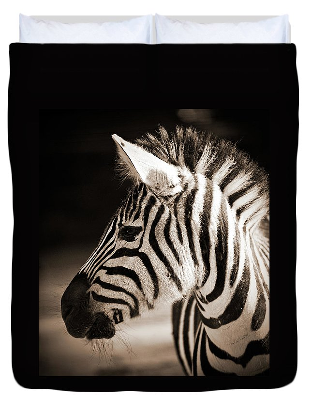 Black Color Duvet Cover featuring the photograph Portrait Of A Young Zebra by Cruphoto
