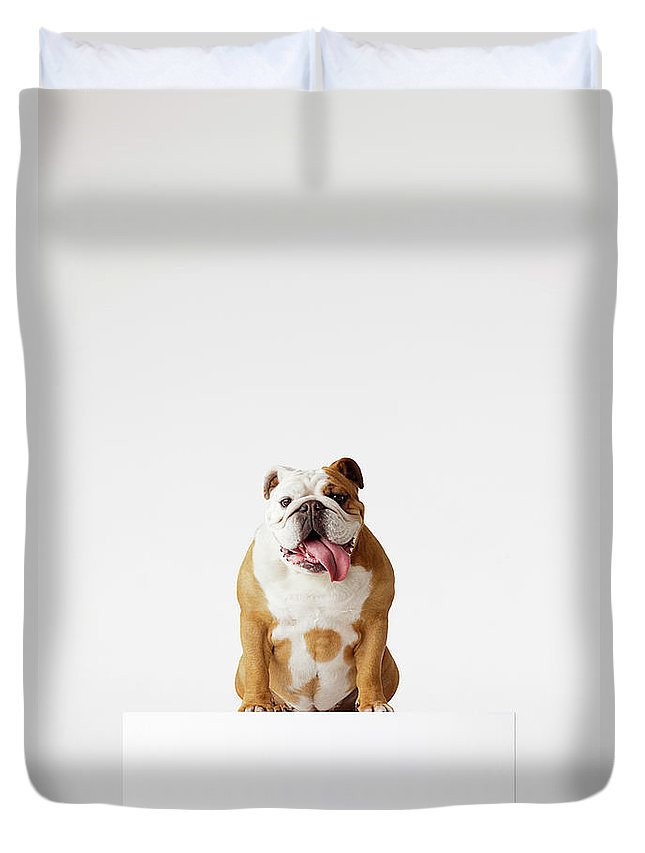 Pets Duvet Cover featuring the photograph Portrait Of British Bulldog Sitting by Compassionate Eye Foundation/david Leahy