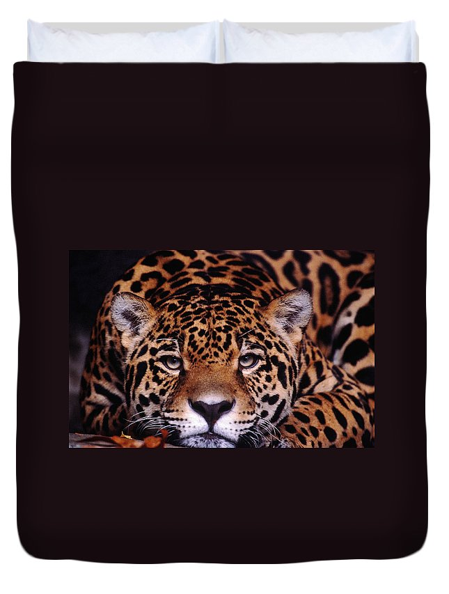 Latin America Duvet Cover featuring the photograph Portrait Of Jaguar, Brazil by Mark Newman