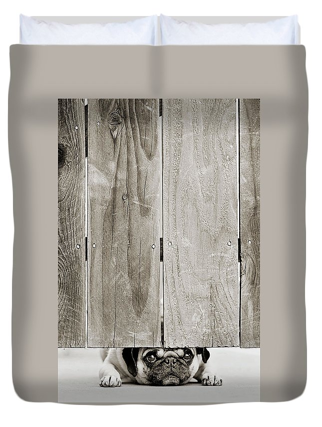 Pets Duvet Cover featuring the photograph Pug Face by Aaryn James