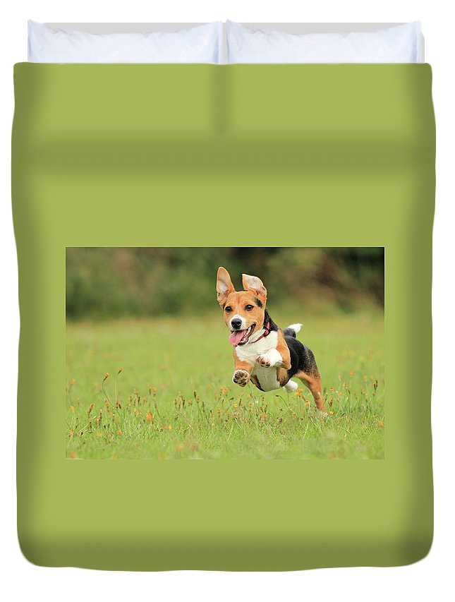 Grass Duvet Cover featuring the photograph Puppy by Paul Baggaley