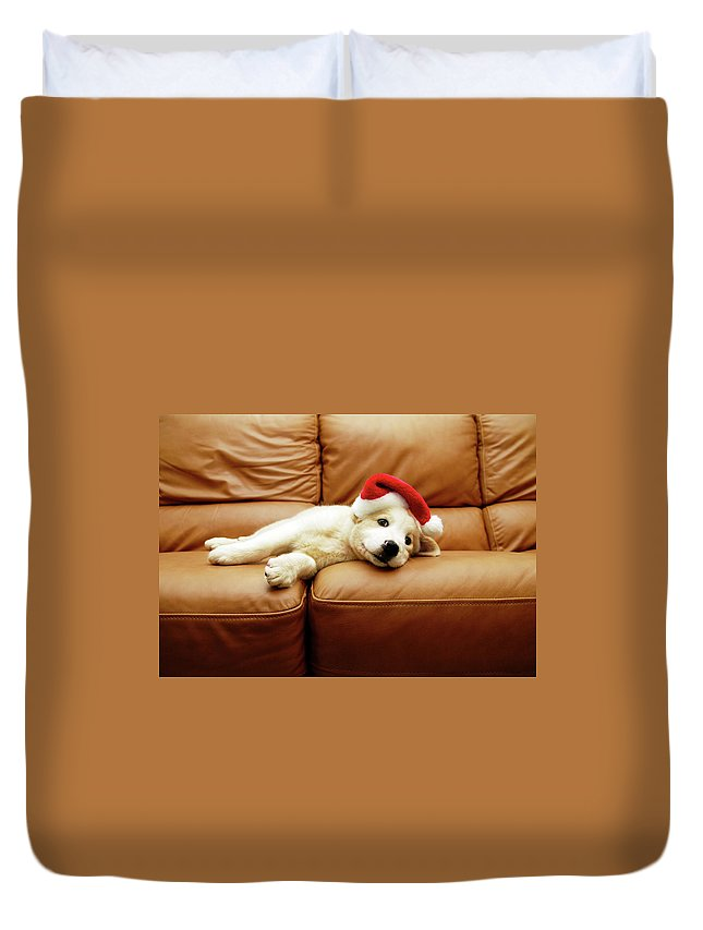 Pets Duvet Cover featuring the photograph Puppy Wears A Christmas Hat, Lounges On by Karina Santos