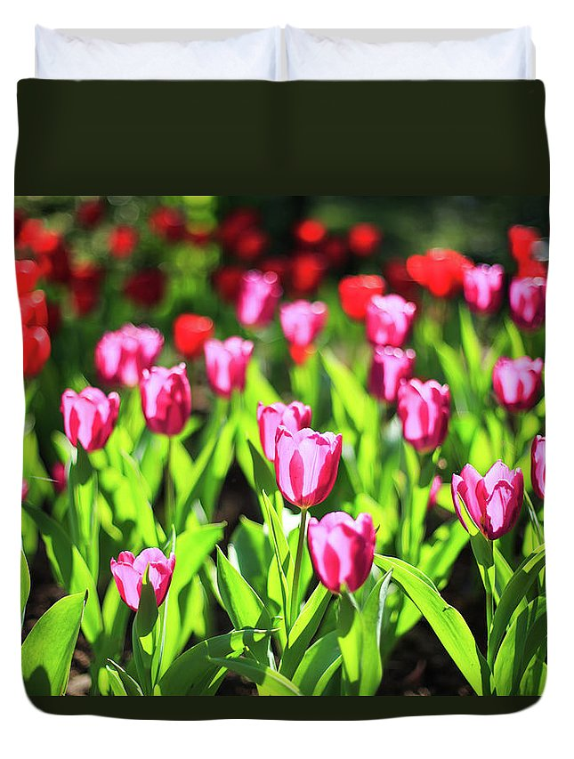 Taiwan Duvet Cover featuring the photograph Purple And Red Tulips Under Sun Light by Samyaoo