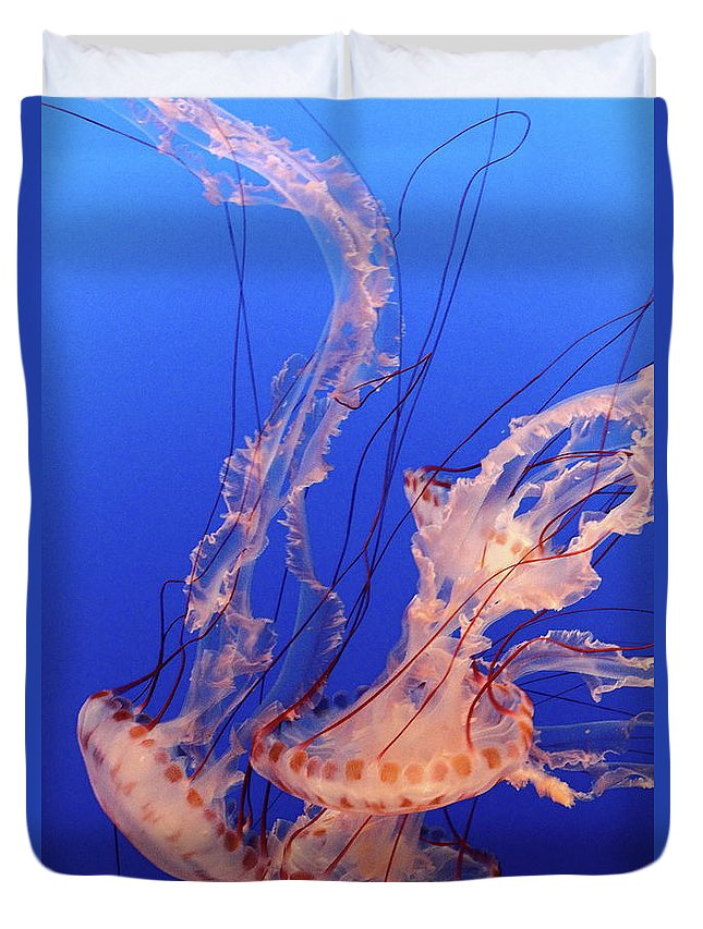 Underwater Duvet Cover featuring the photograph Purple-striped Jellyfish Swimming by Rich Lewis