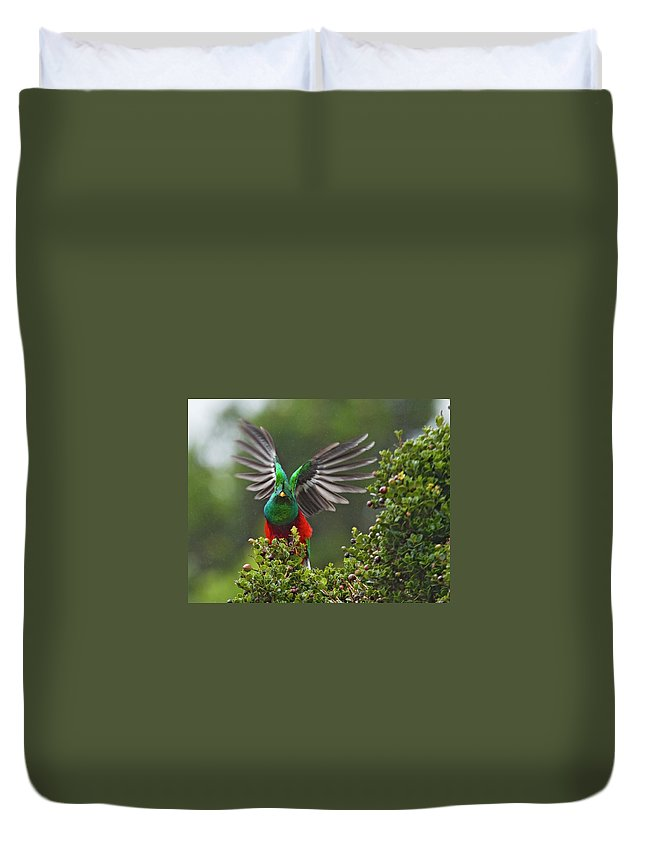Animal Themes Duvet Cover featuring the photograph Quetzal Taking Flight by Photograph Taken By Nicholas James Mccollum