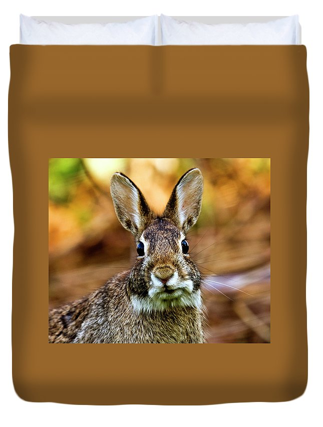 Animal Themes Duvet Cover featuring the photograph Rabbit by Hvargasimage