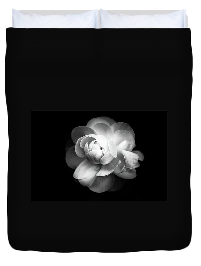 Black Background Duvet Cover featuring the photograph Ranunculus Flower by Annfrau