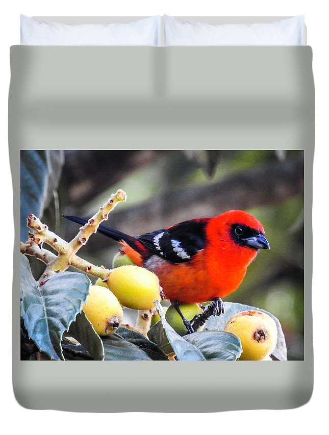 Panajachel Duvet Cover featuring the photograph White Winged Tanager by Matias Feucht