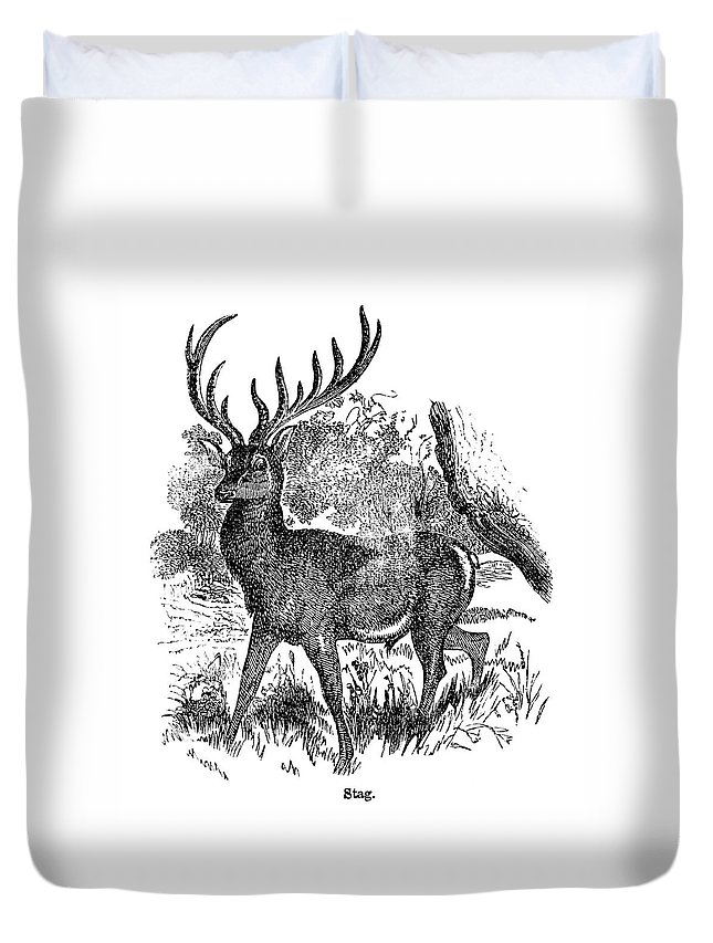 Engraving Duvet Cover featuring the digital art Red Deer Stag Engraving by Nnehring
