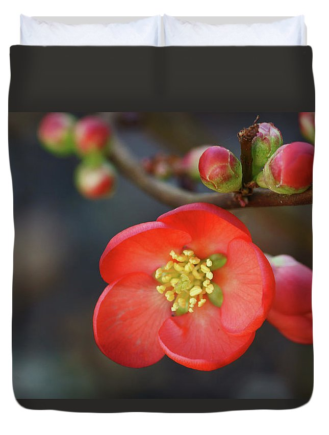 Bud Duvet Cover featuring the photograph Red Flowering Quince by Picture By La-ong